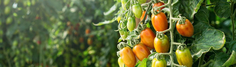 Tomato & Vine Twine