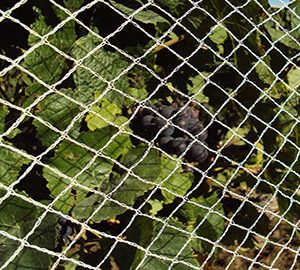Vine Netting Homepage Picture