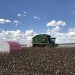 Pink wrap field 3